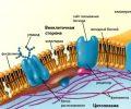 Биологиялық мембрана слайд (презентация)